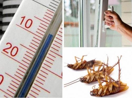 Как побороть тараканов. Как избавиться от тараканов в домашних условиях