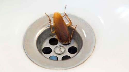 Что поможет избавиться от тараканов в квартире раз и навсегда. Условия для размножения тараканов